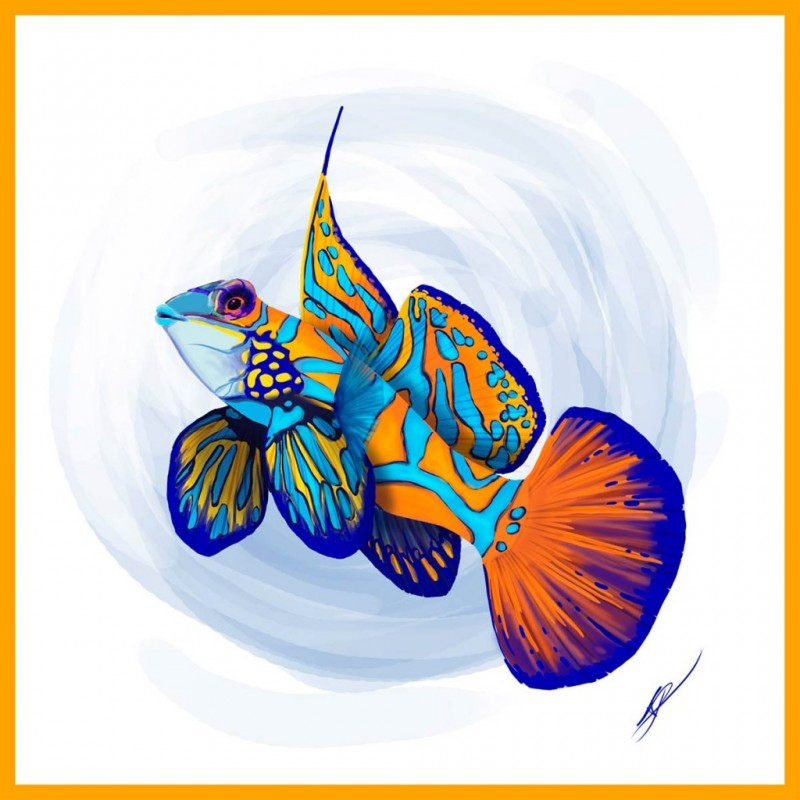 illustration de poisson-mandarin réalisée pour directpoissons.com par l'Agence de Com'