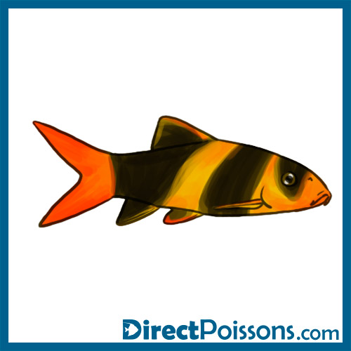 Illustrations par l 39 agence de com 39 directpoissons for Vente poisson rouge en ligne