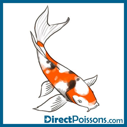 Illustrations par l 39 agence de com 39 directpoissons for Vente carpe koi voile